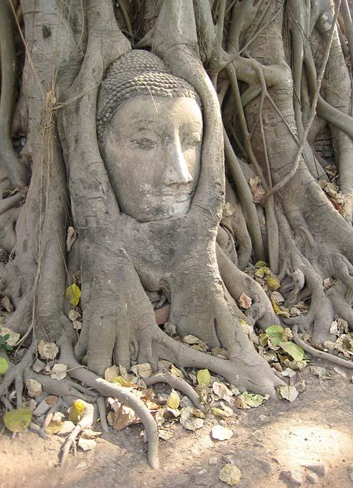 سر یک تصویر بودا که در ریشه های یک درخت بنیان در Mahathat Ayutthaya تعبیه شده است